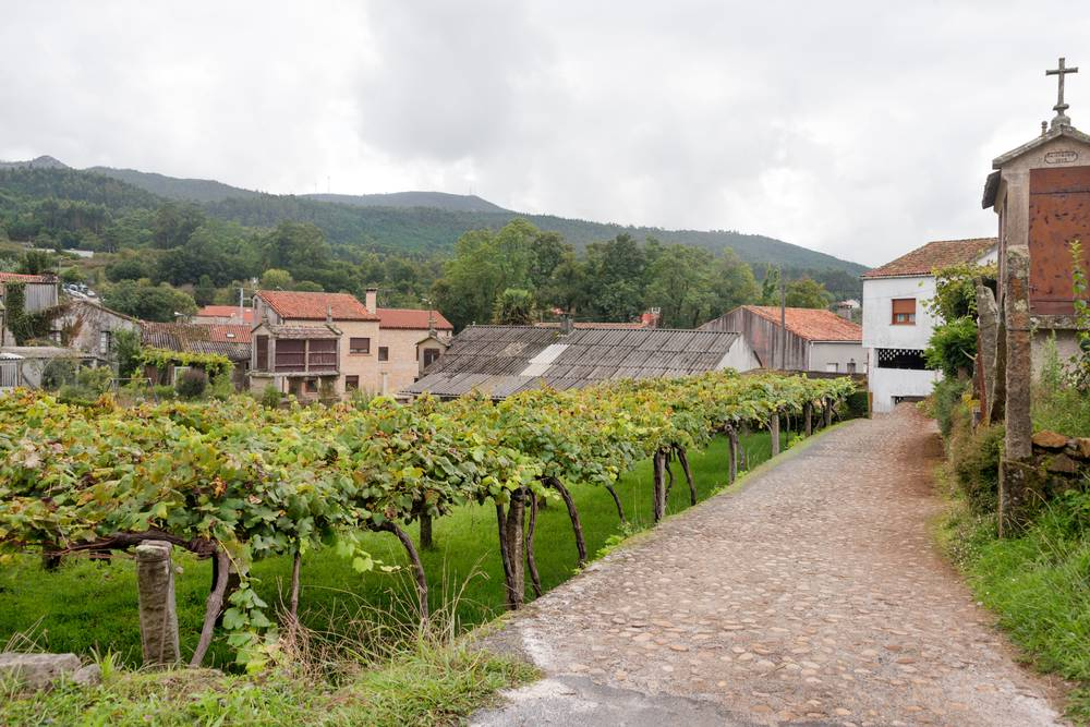 https://uwalk.ie/wp-content/uploads/2019/11/Pontevedra-–-Caldas-de-Reis-3-Portuguese-Way-Walking-Tour.jpg