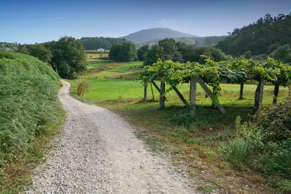 https://uwalk.ie/wp-content/uploads/2019/11/Pontevedra-–-Caldas-de-Reis-Portuguese-Way-Walking-Tour.jpg