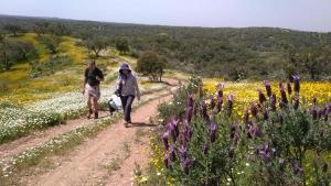 Camino Uwalk Pilgrims